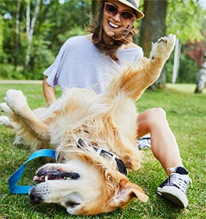 woman playing with golden retriever dog